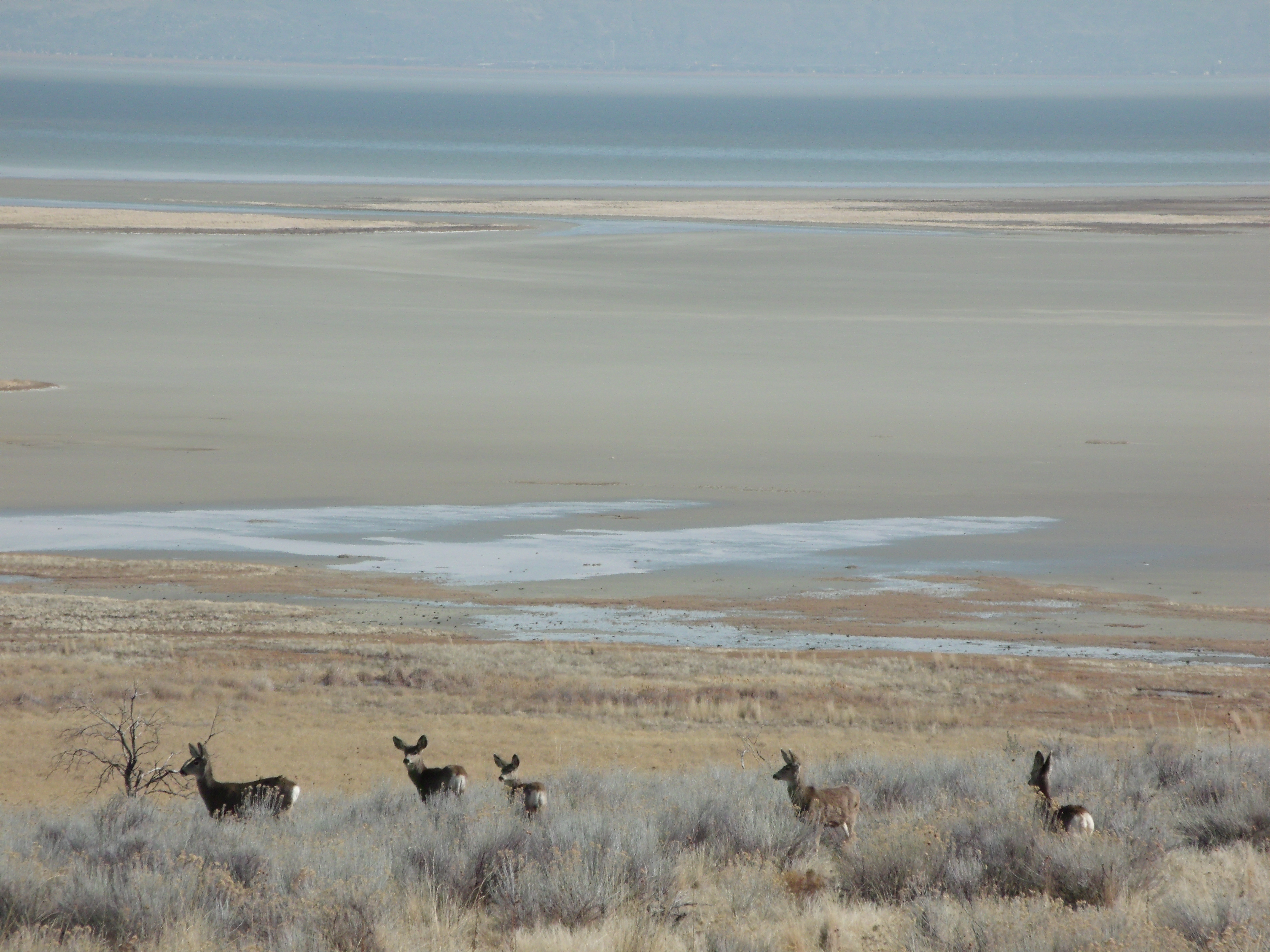 Field Trip To Antelope Island Scott S Place Images And
