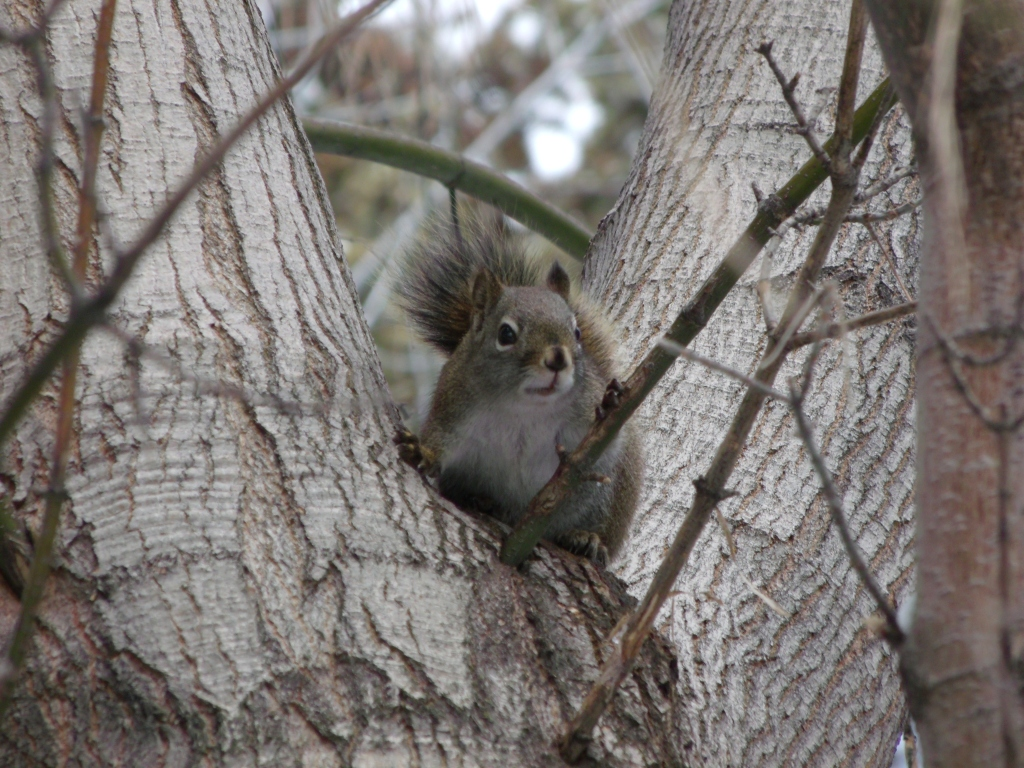 Salt Lake City Squirrel