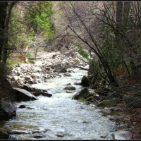Springtime on Little Cottonwood Canyon Stream