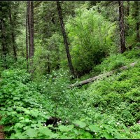 Millcreek Canyon in Green