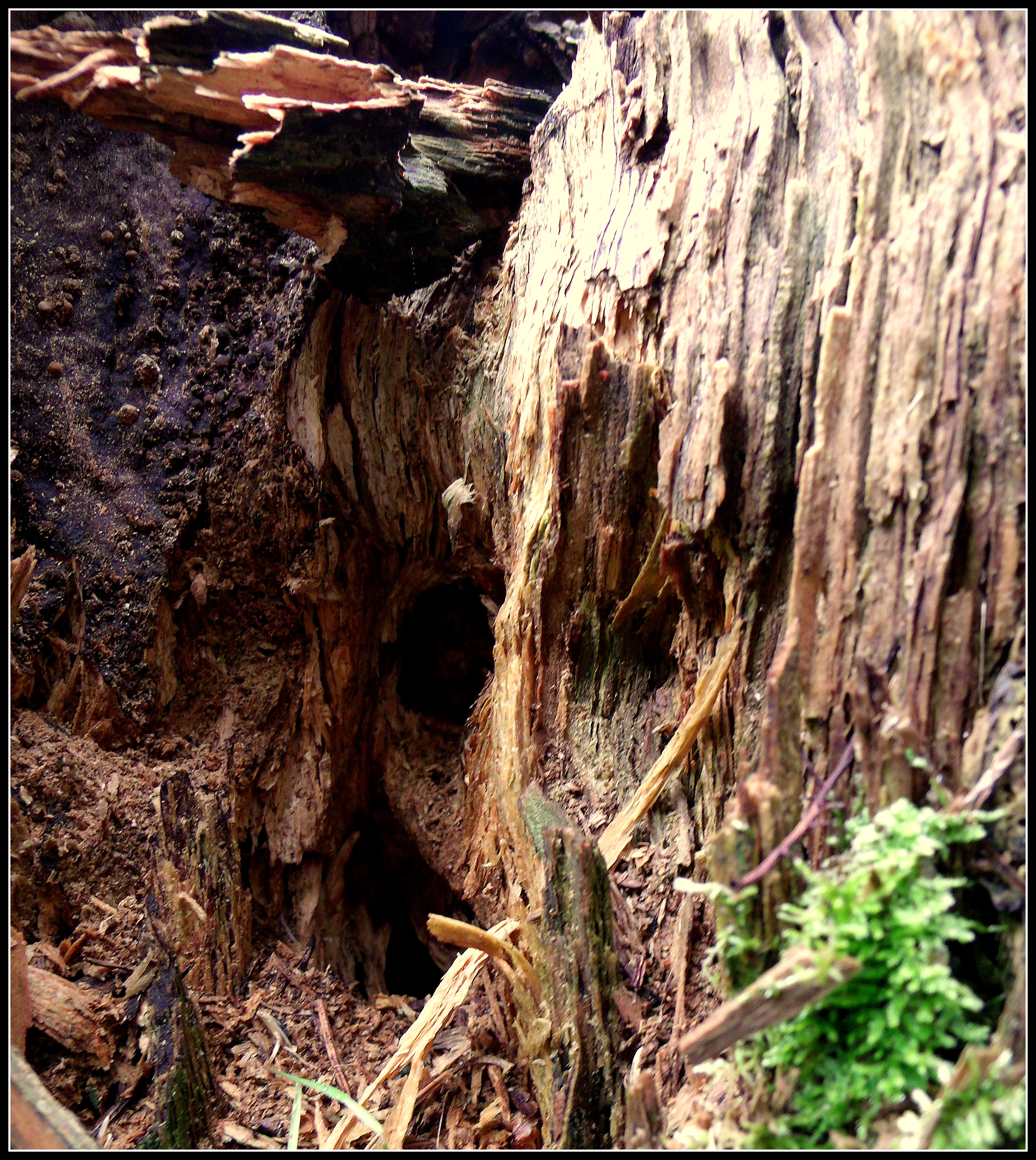 Tree Stump: Scott's Place...Images And Words