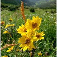Wildflowers of Mineral Fork