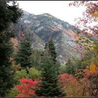 A Taste of Autumn in the Wasatch Mountains....