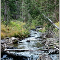 Red Pine Stream