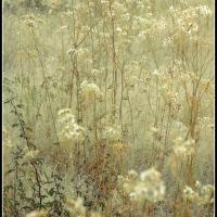 Desert Wildflowers....