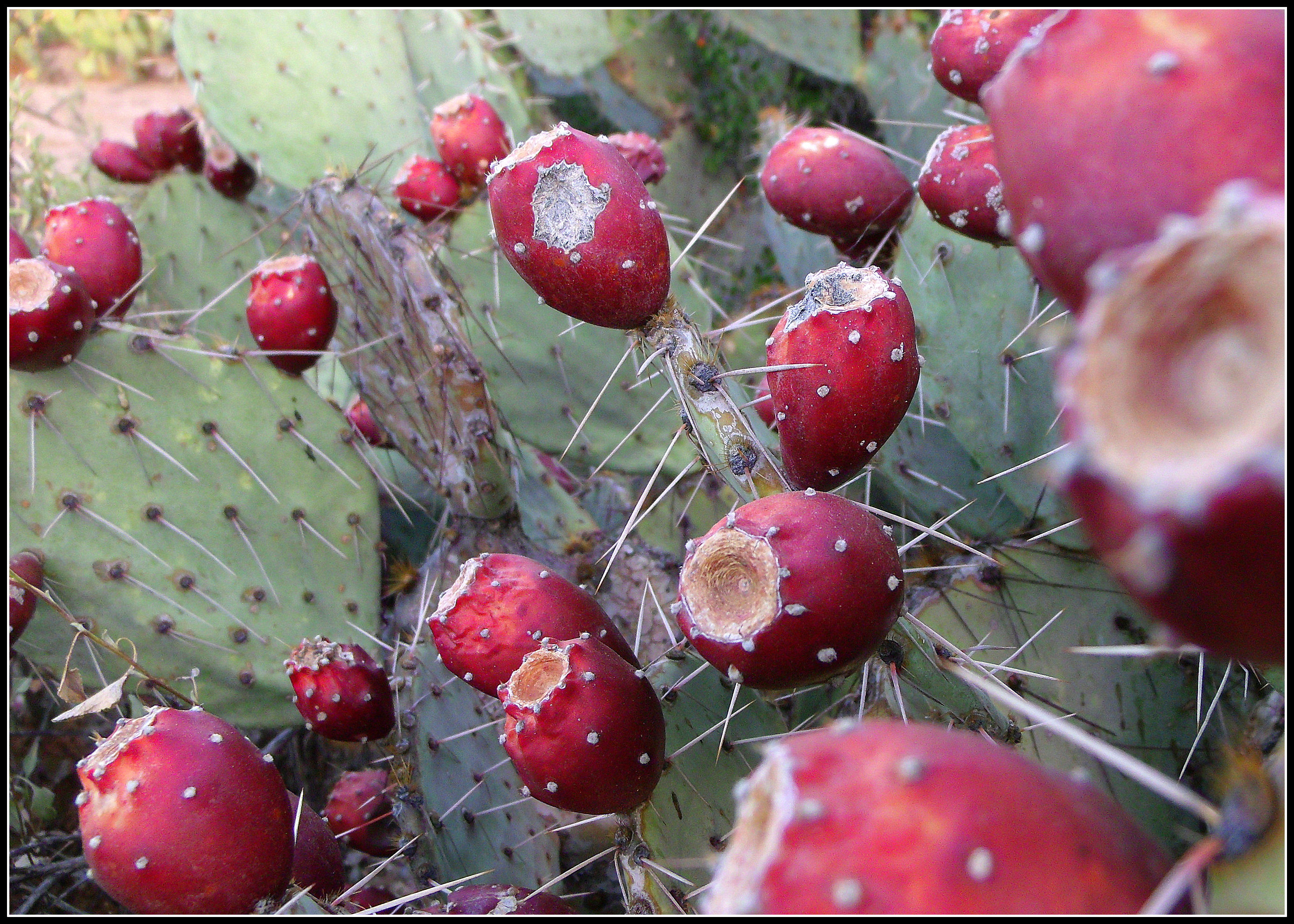 Tucson desert : Scottu0026#39;s Place...Images and Words