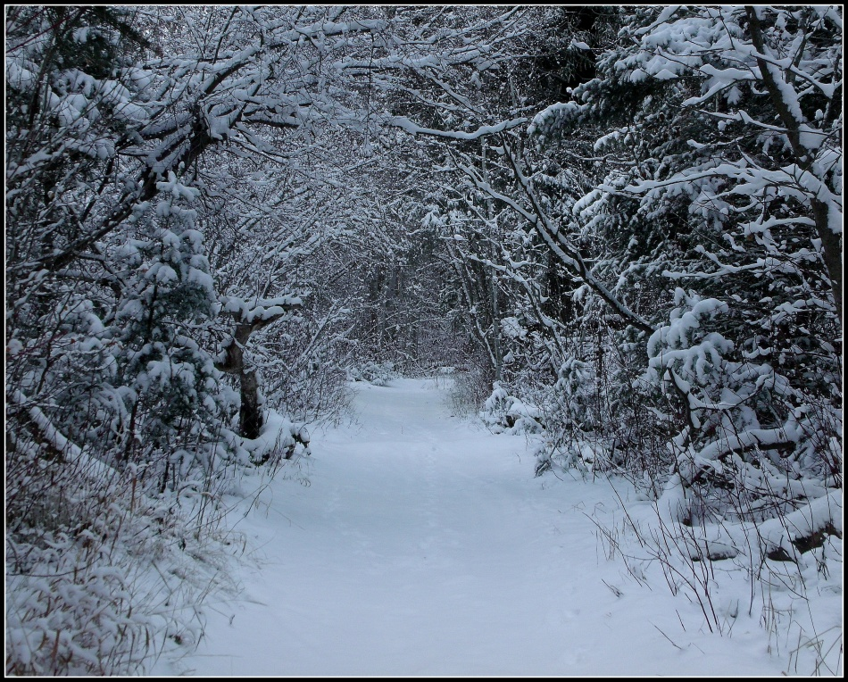 Snow canopy over trail