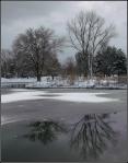 Liberty Park Pond IslandReflection