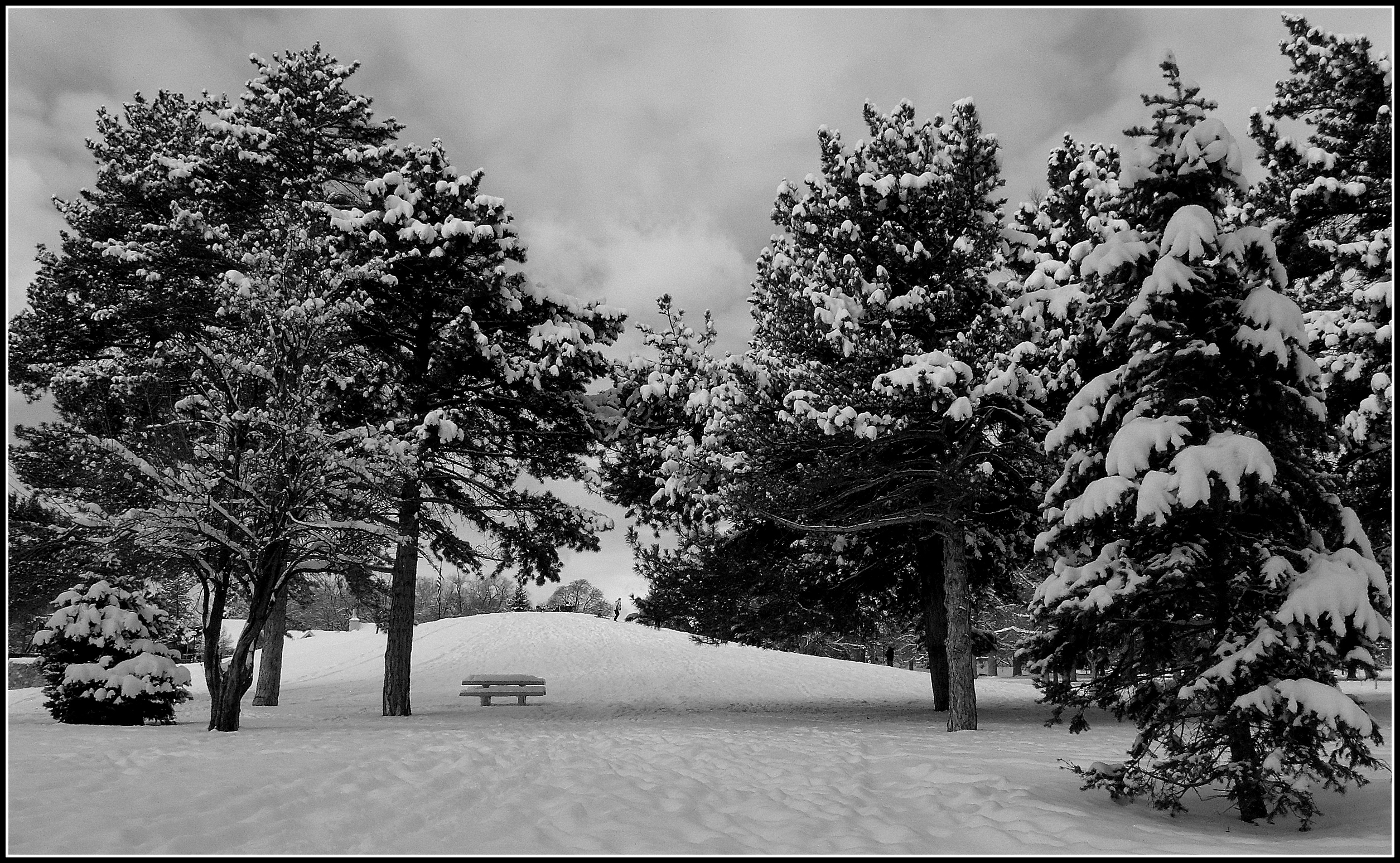 black and white snowy trees wwwpixsharkcom images