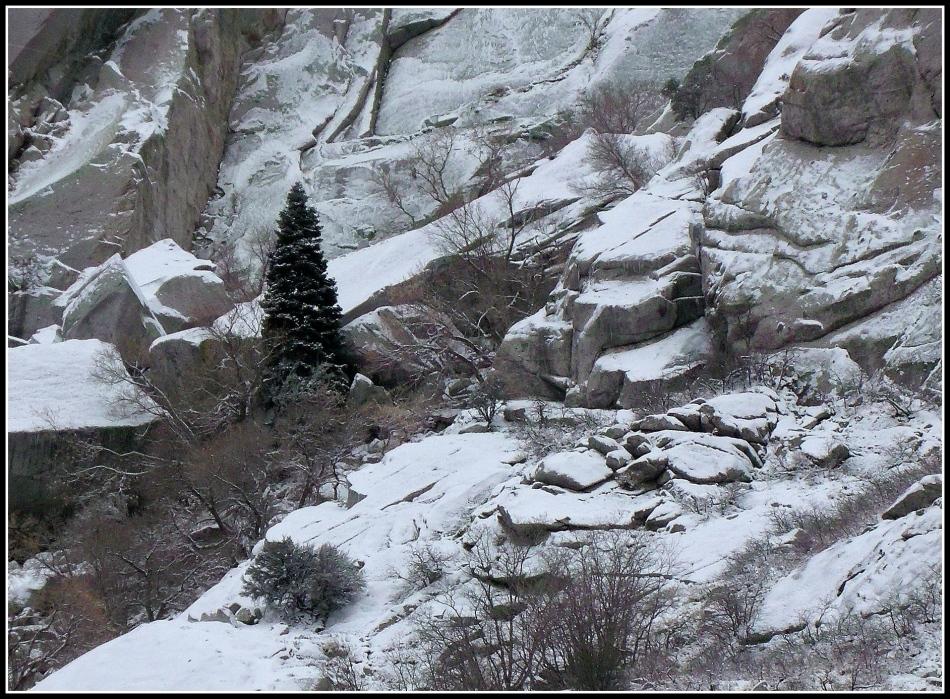 Christmas Tree in Little Cottonwood Canyon Utah