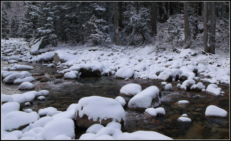 Stream in Snowy Woods