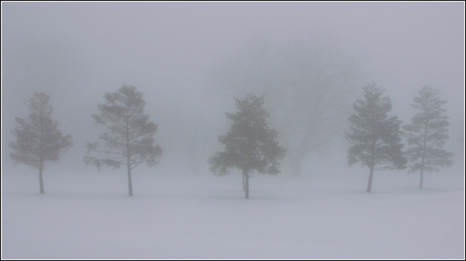 five trees in fog with silhouettes