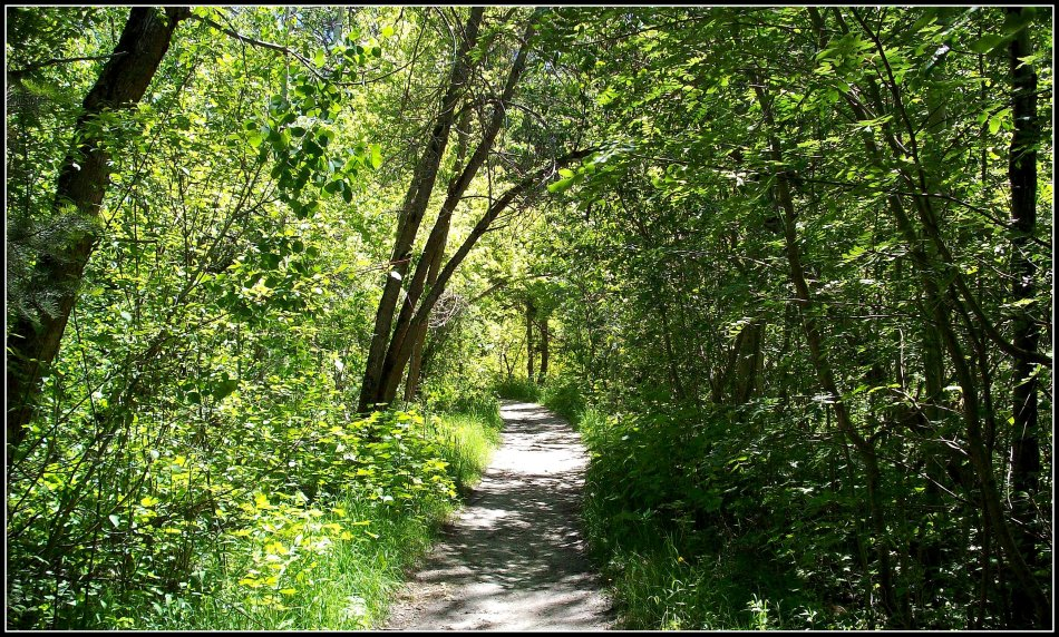 Little Cottonwood Canyon Trail in June