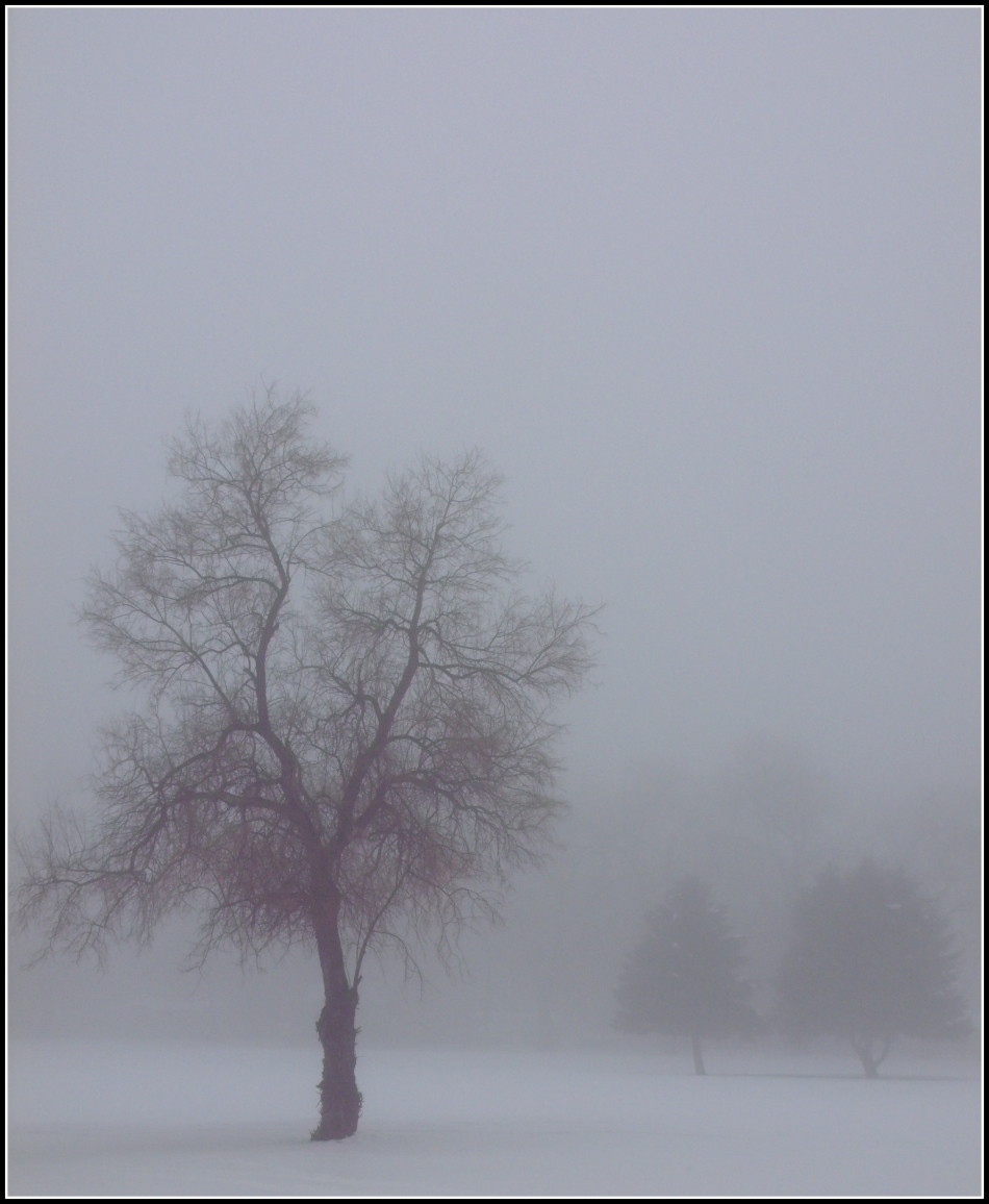 one tree with silhouettes in fog