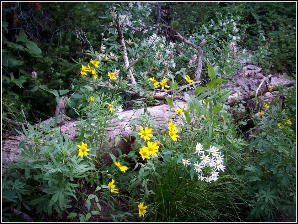 September wildflowers and tree trunk