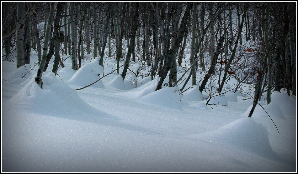 Snow blankets on trees