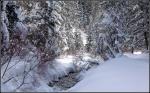 Snowy Millcreek Canyon Stream1