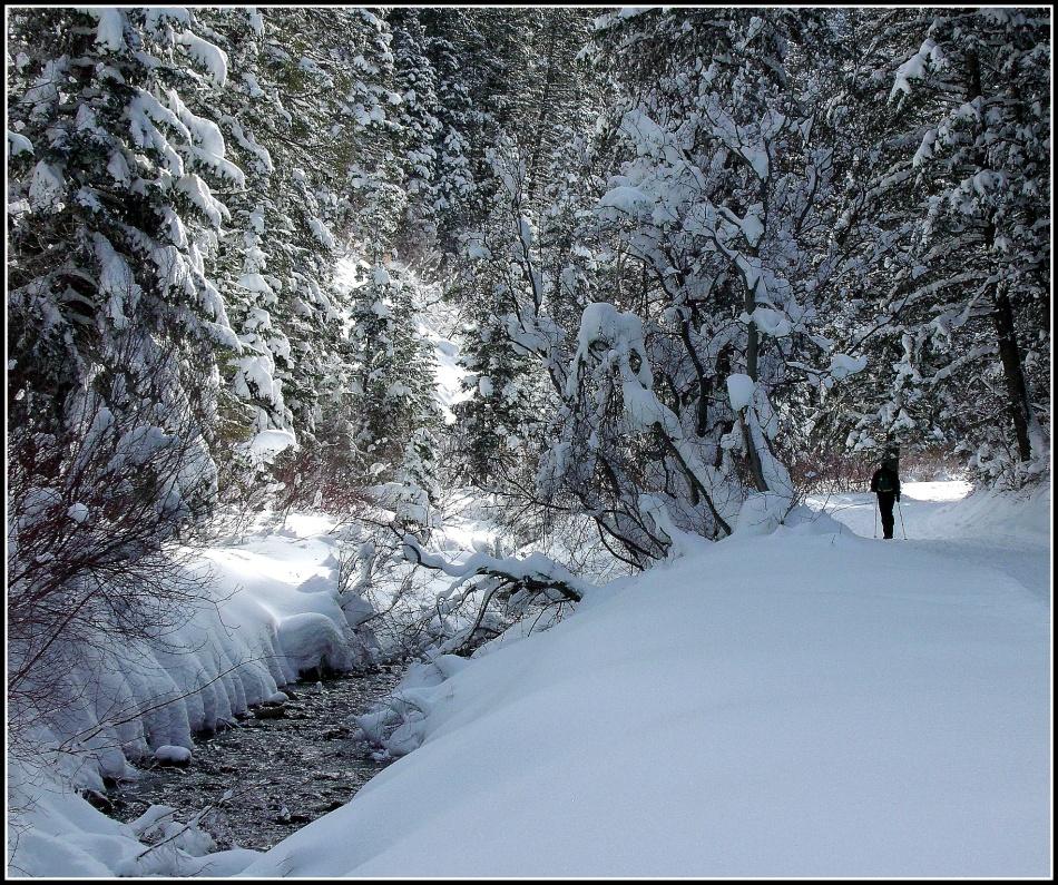 Snowy Millcreek Canyon Stream 2