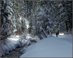Snowy Millcreek Canyon Stream3