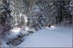 Snowy Millcreek Canyon Stream4