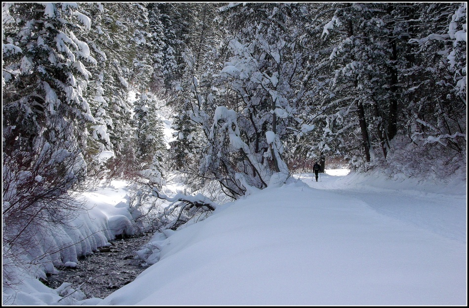 Snowy Millcreek Canyon Stream 4