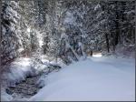Snowy Millcreek Canyon Stream6
