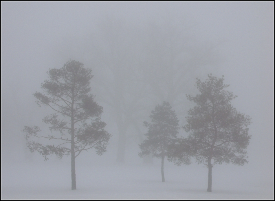 three trees with silhouettes in the fog