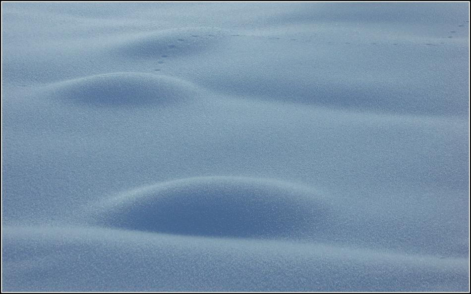 tiny tracks over snow mounds
