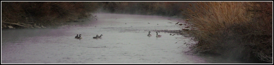Jordan River morning with Canada Geese