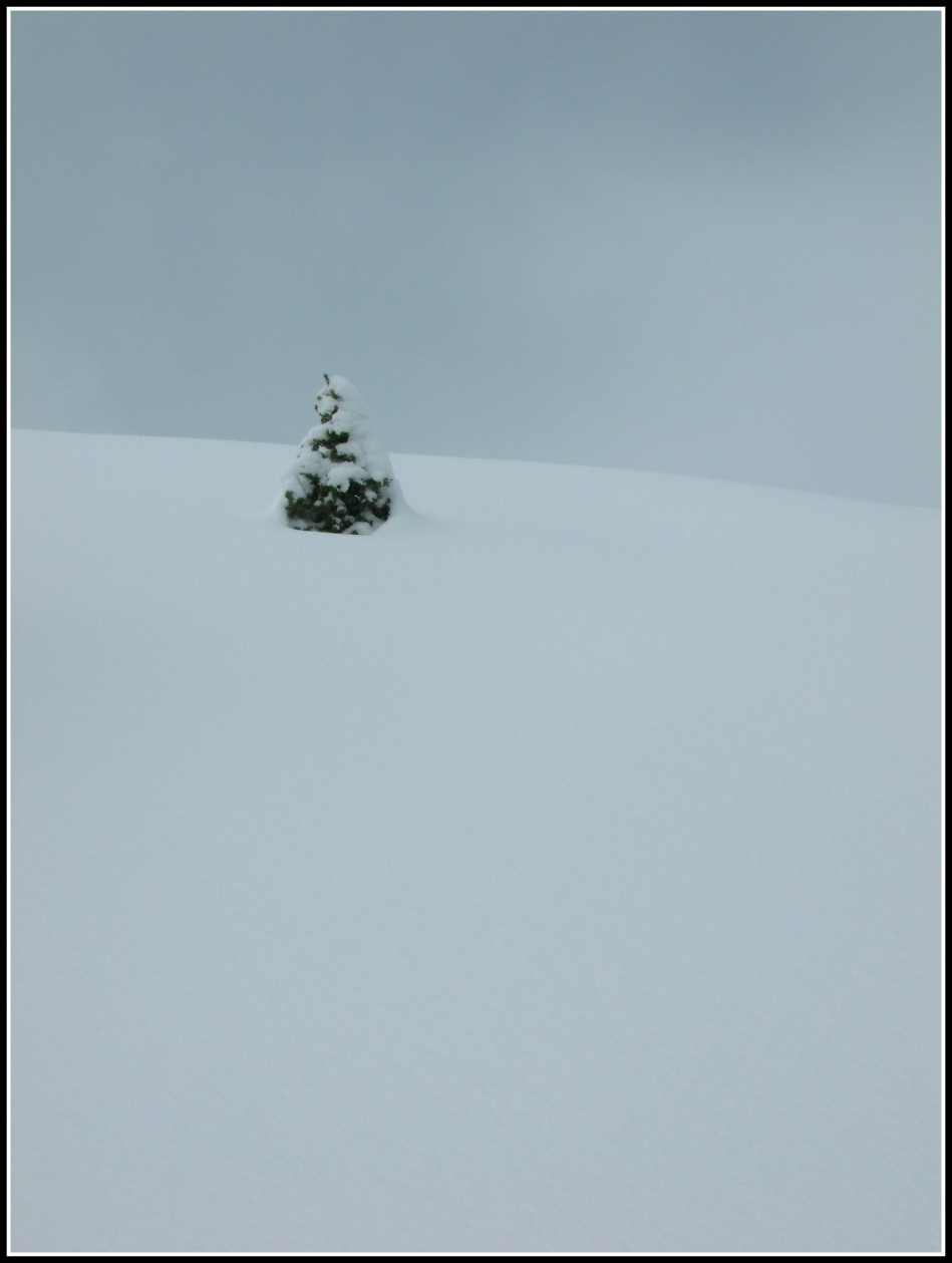 solitary pine on snowy hilltop
