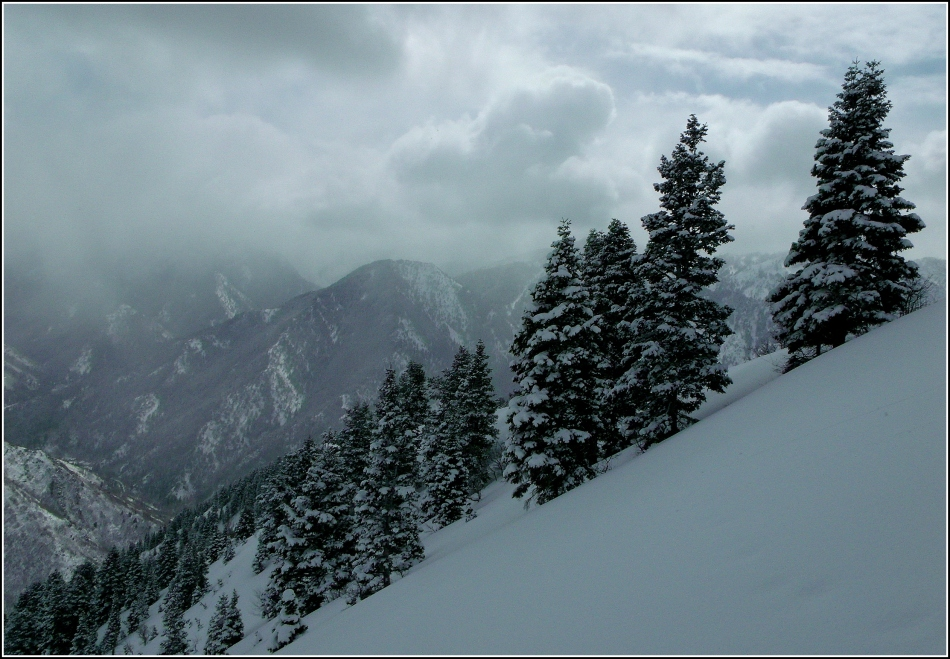 Trees and clouds on ridge-line to Grandeur Peak, Utah