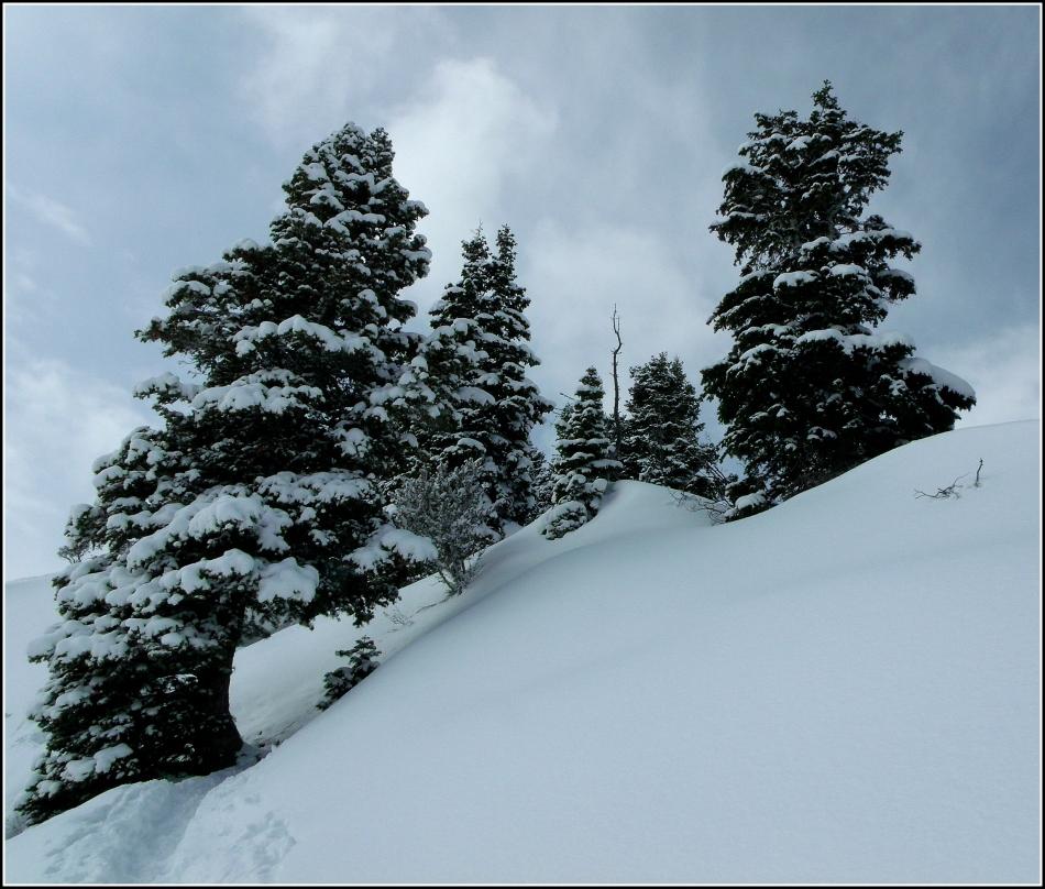 Trail beneath the tree, to Grandeur Peak Utah