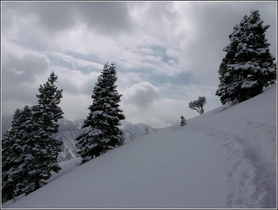 Clouds, trees and trail to Grandeur Peak, Utah