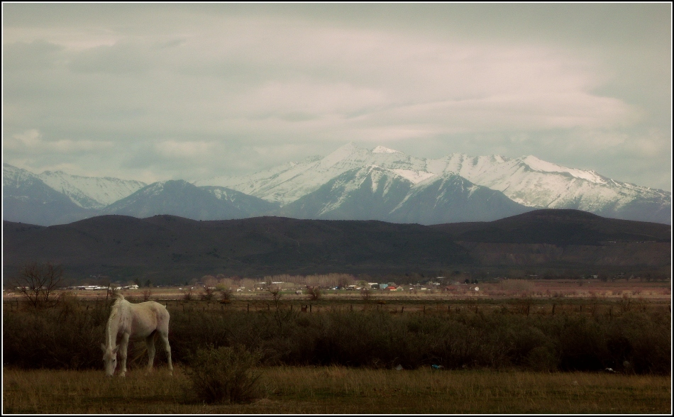 horse grazing under wasatch uinta mountains, goshen utah