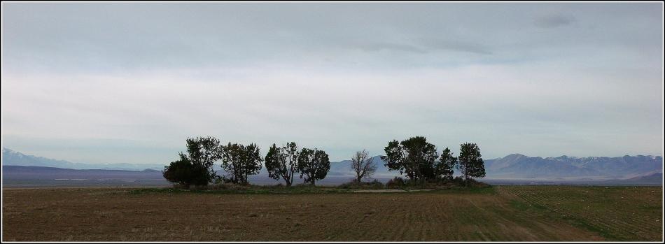 island in a field