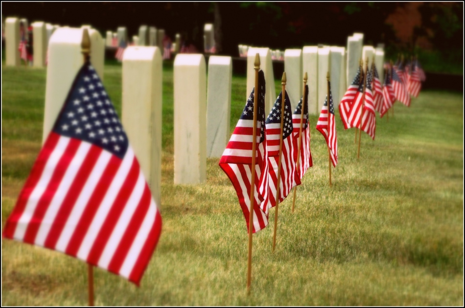 Memorial Day Flags in Cemetery