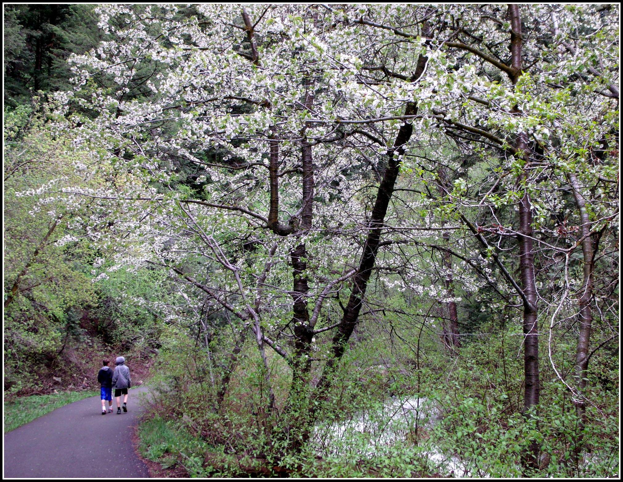 Boys walking trail in Mill D South