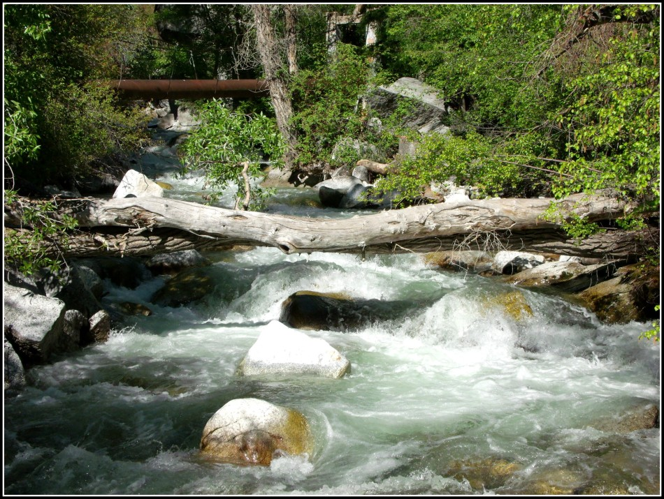 Fallen trees over Little Cottonwood Canyon Stream Utah