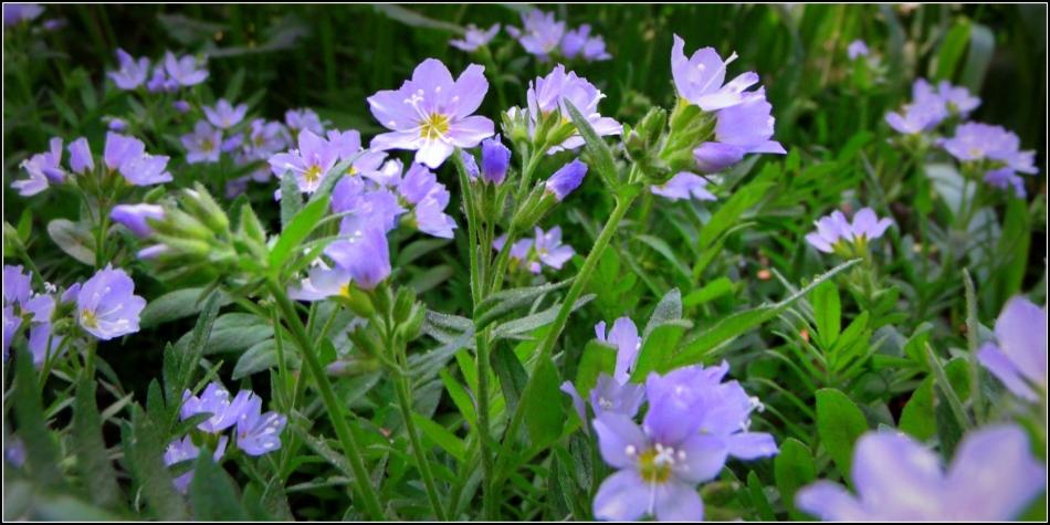 wildflower morning