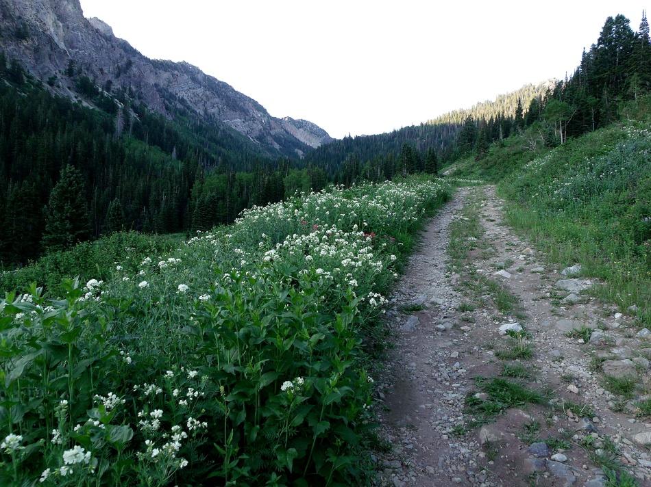 Cardiff Fork Trail