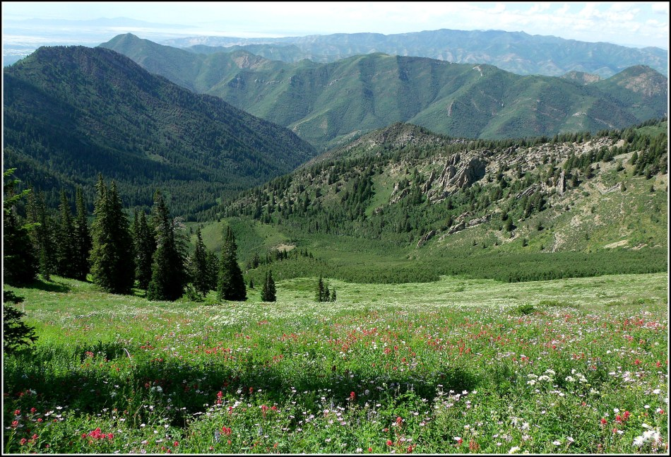 Bowman Fork Wildflowers with Grandeur Peak and Millcreek Ridge