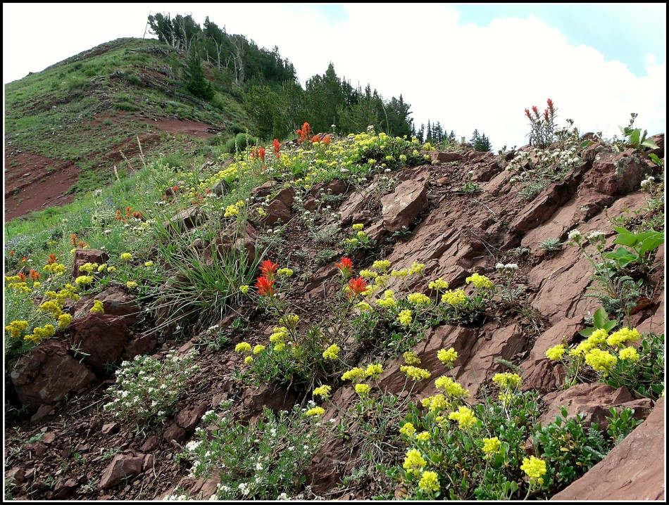 Mountainside flower garden