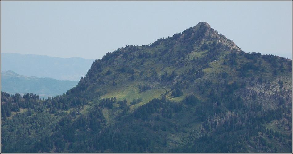 Mt Raymond's yellow mantle