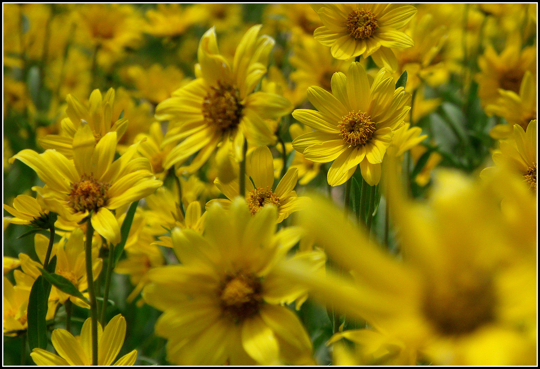 Wasatch Mountain Wildflowers Scott S Place Images And