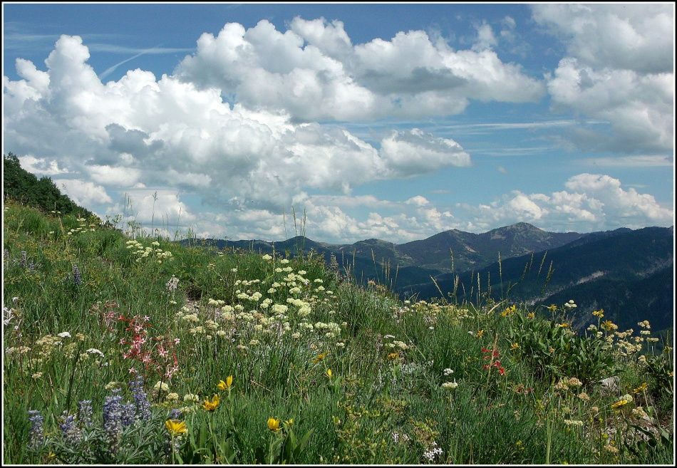 wildflowers clouds and mountains