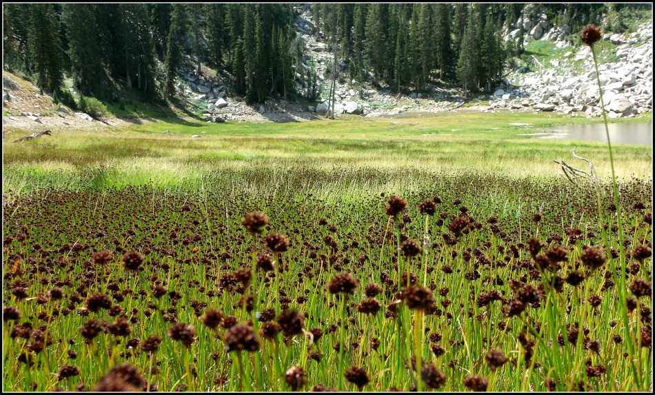 Dr Seuss Flowers at Bells Canyon Upper Reservoir