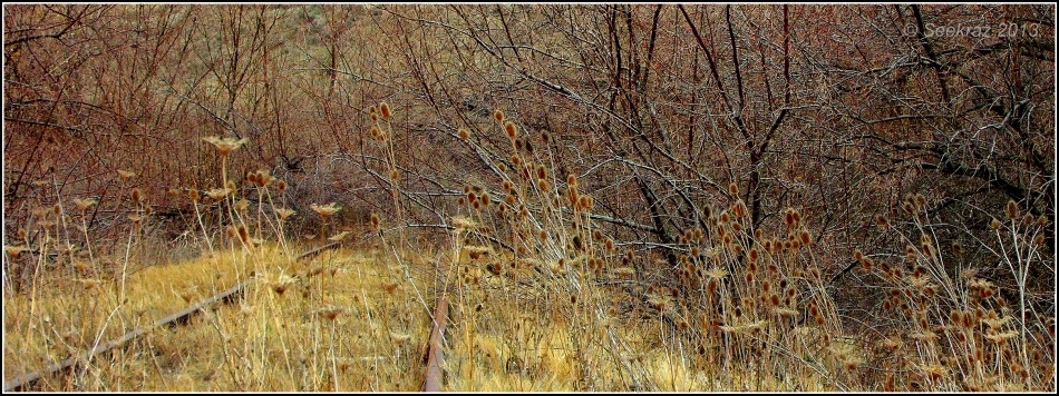 abandoned rail-line in fall