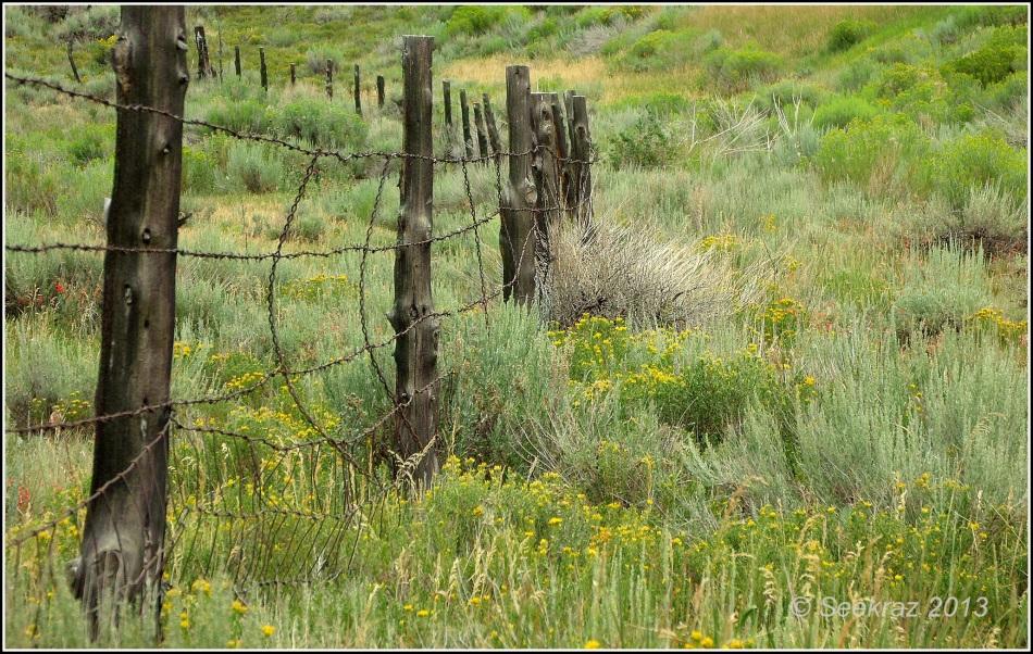 Scofield fence-line