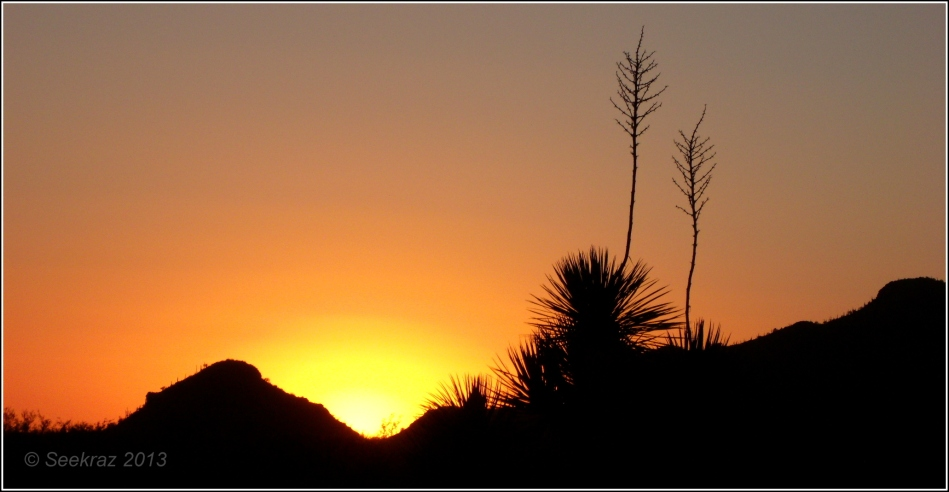 Desert Yucca sunset