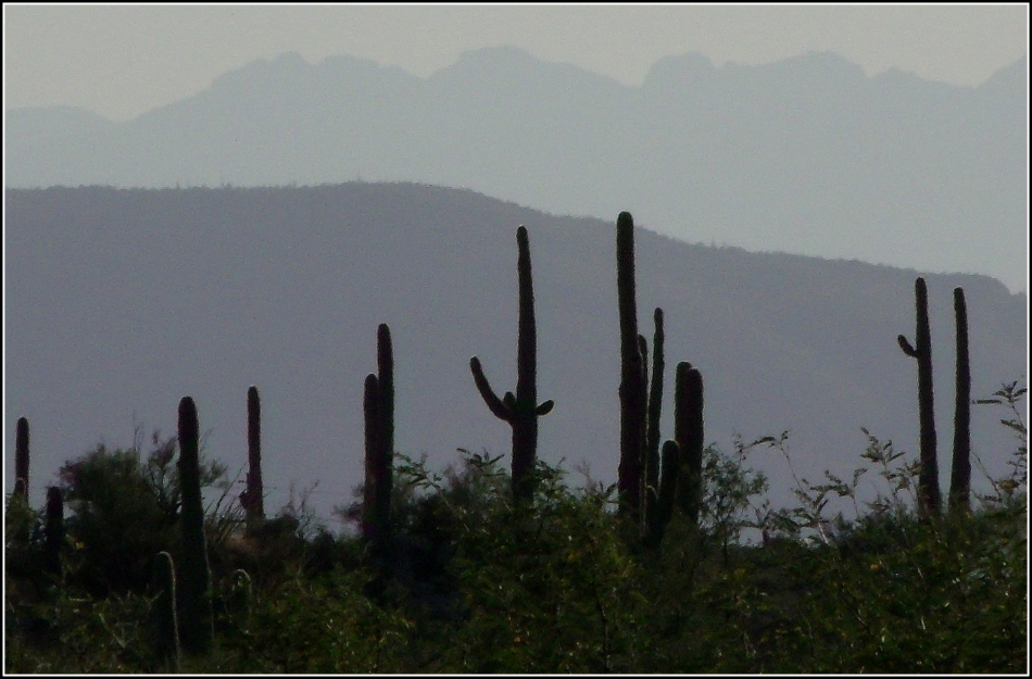 Saguaro and mountain silhouette